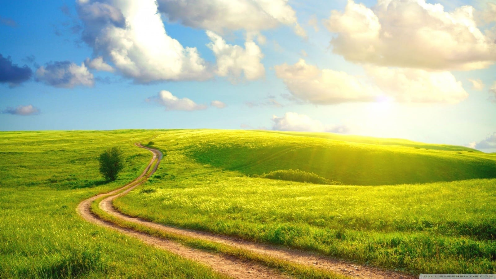 path_field