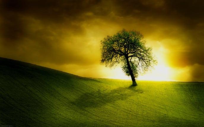 David & Solomon: Wisdom with Power – SeekersGuidance