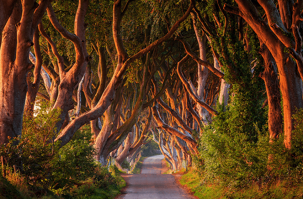 tree-tunnel
