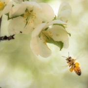 Photo by Andrea Reiman on Unsplash; bees; similtudes