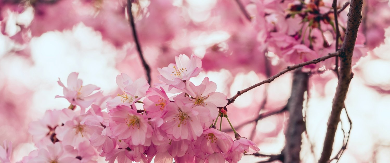 flowers menstruation puberty female purification